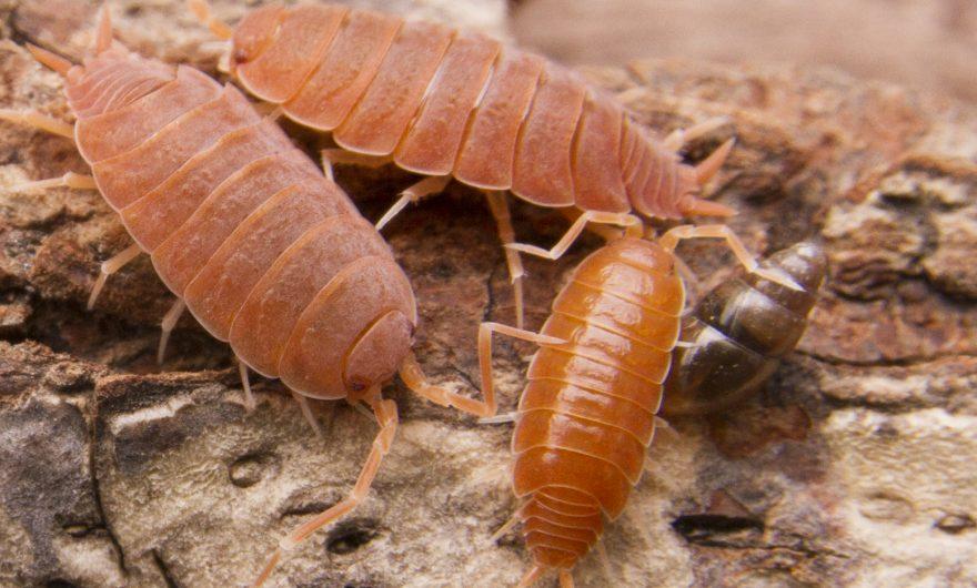 Capsules d'informations sur les Isopodes – Habitat et paramètres 2/3