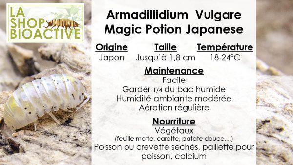 isopod armadillidium magic potion