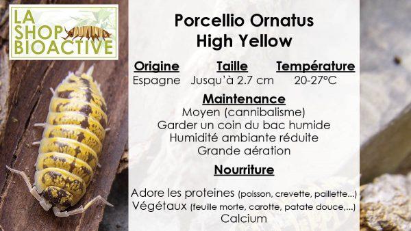 isopod ornatus high yellow