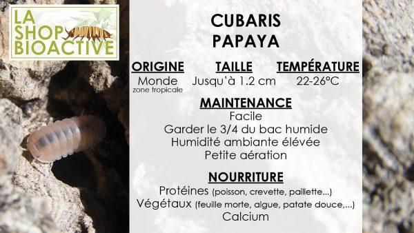 isopod cubaris papaya